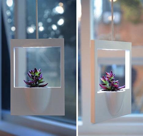 polaroid living plant photograph