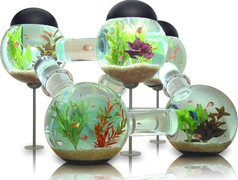 Aquarium Online Store has fish tanks in many sizes and shapes. Secure online ordering. Direct delivery. Live US-based customer service.