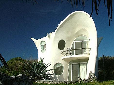 shell-natural-beach-