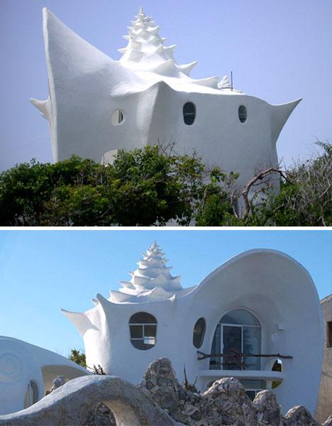 shell-shaped-organic