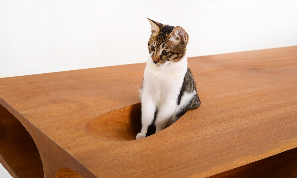 Share Fun and Quality Time With Your Cat With Designer Ruan Hao's CATables