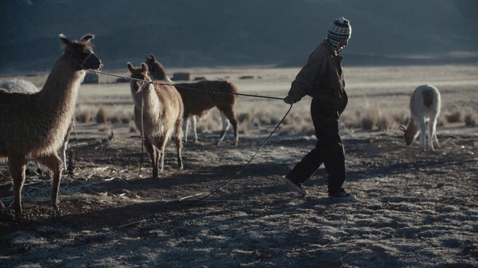 bolivian llama herder